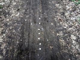 Kronkorken auf einem Waldweg