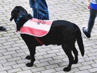 1. FSV Mainz 05 II vs. Chemnitzer FC