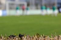 Blick über die Hecke im Stadion na Plynarne