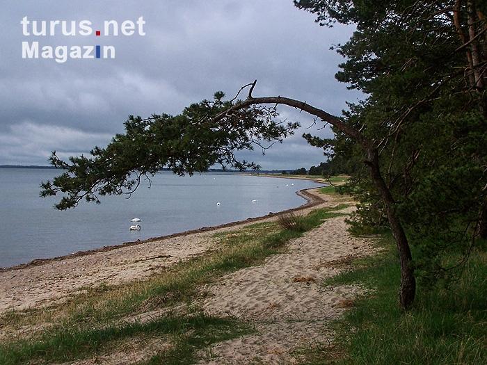 Foto: Strand auf der Insel Rügen - Bilder von Ostseeküste ...