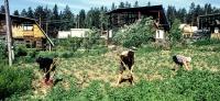 Sibirisches Tagebuch 2001: Alltag und Feldarbeit auf einer Datsche bei Irkutsk