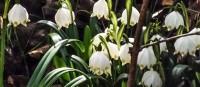 Reservat śnieżycowy Jar: Ausnahmezustand, wenn die Frühblüher sprießen