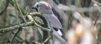 """Alle Vögel sind schon da?! Stipp-Visite am Reservat """"Zgierzynecki-See"""""""