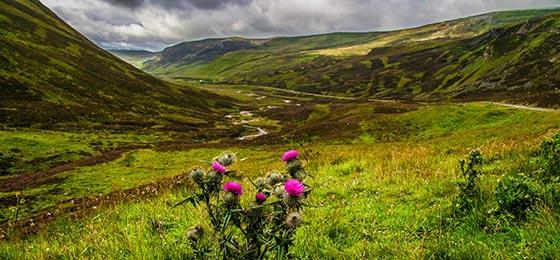 Schottland mein Land: Yes oder No