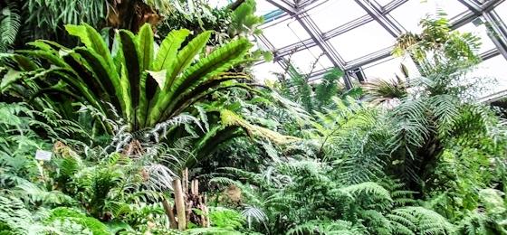"""Einst """"Fluchtort"""", heute Ziel für Familienausflüge - das Tropenhaus im Botanischen Garten"""
